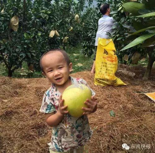 """美莱""""悦基金""""邀您一起助力公益,送您1颗柚子,为他添份爱心"""