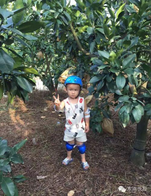 孩子在爸爸的柚子园里玩