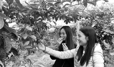 浦源镇依托蓬勃兴起的旅游业大力发展旅游观光生态农业