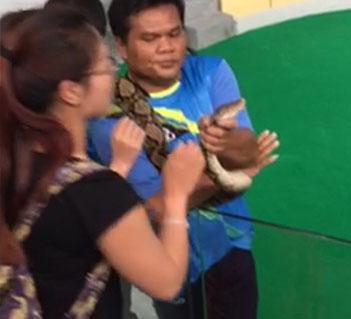 中国女游客泰国吻蛇被咬鼻子