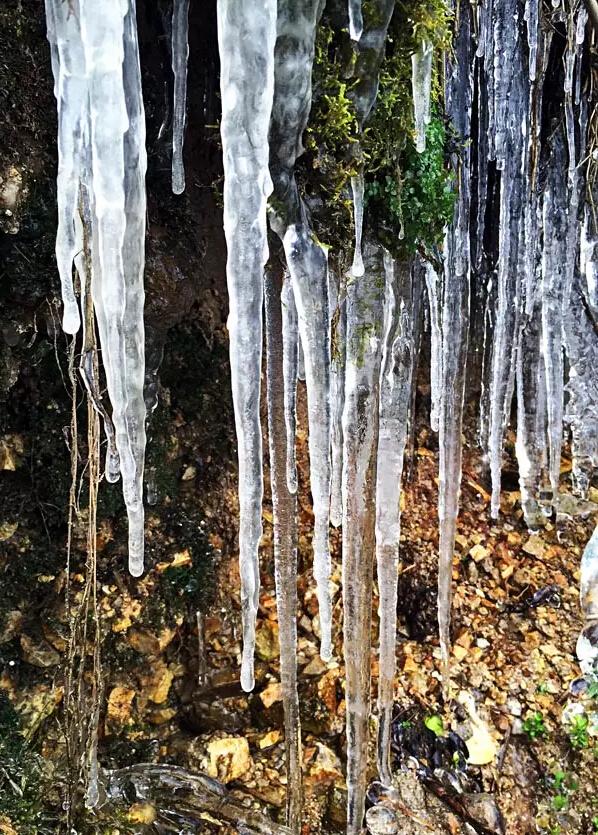 在海都网可遇不行求的冰挂、初雪照
