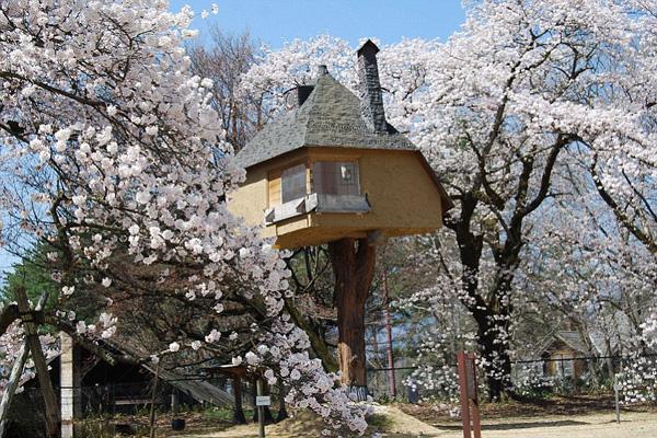 如此迷人 盘点世界各地精美舒适的树屋