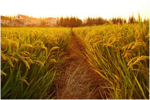 为什么选择留在农村种地的农民越来越少?