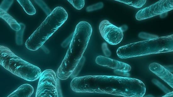美国发现无敌细菌 以后这种无敌细菌用什么药治?