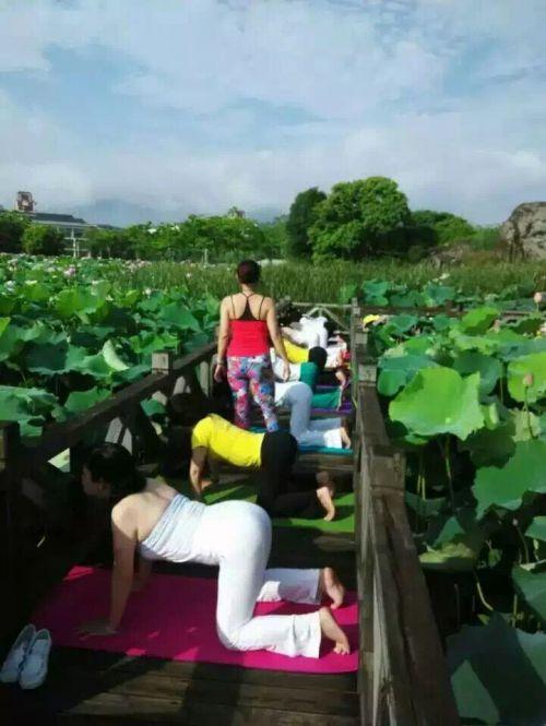 游客在福建中医药大学 荷花池上占道组团练瑜伽