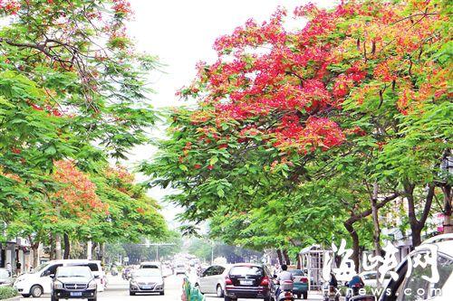 莆城每一个季节都有鲜花相伴 花香飘四季