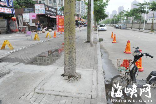 水泥封住了树池