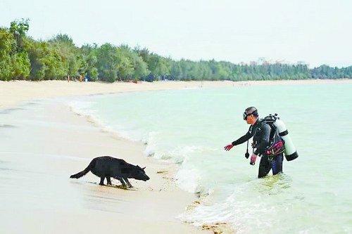 厦门搜救犬江西水灾救援殉职 曾参加近百次救援