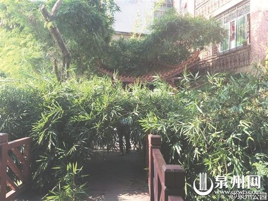 泉州市区公园又遭毒手 越野车碾花苗绿竹被砍了
