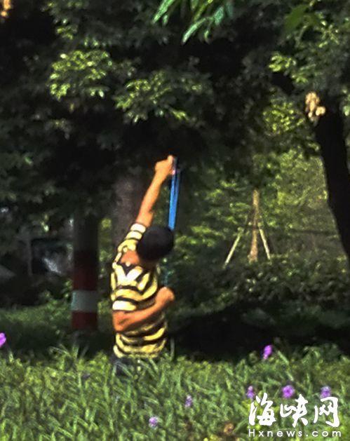 光明港公园 有人用弹弓打鸟