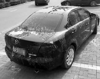 车漆被腐蚀性液体严重损毁 新文化记者 邢阳 摄