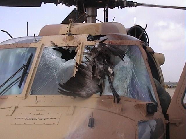 组图:F-16高速撞鸟被抓拍 飞鸟瞬间四分五裂