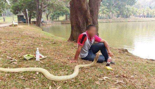 """泰国男子娶3米眼镜蛇为妻 """"婚后""""生活超甜蜜"""