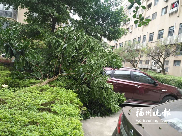 小区绿化树被砍倒砸中小车 律师:物业应该担责
