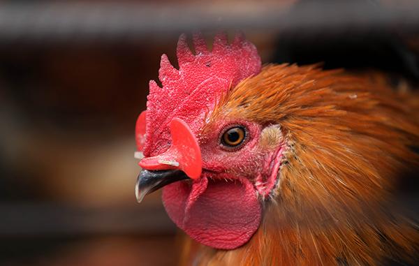 安徽、上海、江苏人感染禽流感疫情多发 多地关活禽交易市场