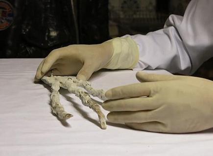 秘鲁发现神秘大爪只有三根手指 每根手指都有六个指节(2)