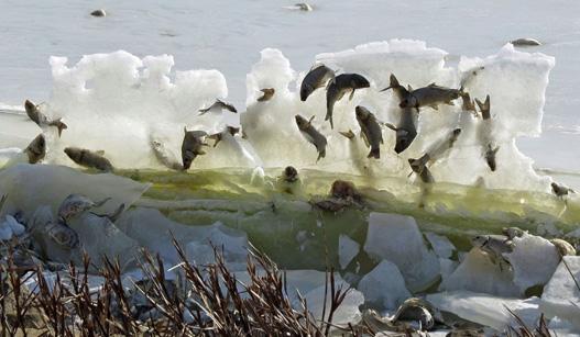 美国一自然公园现奇景 鱼被冰封在空中