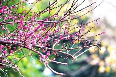 初放的梅花盈盈立于枝头