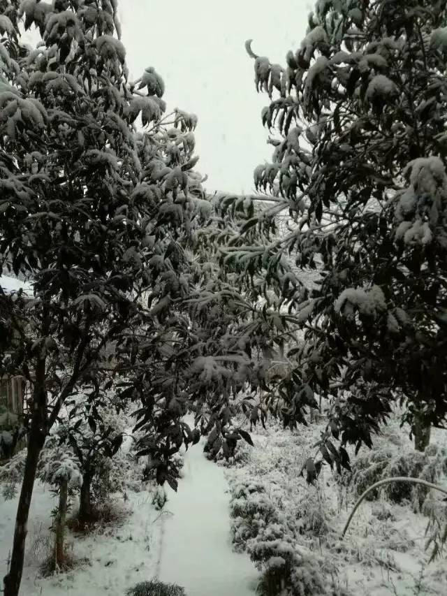 闽北大雪纷飞一片白茫茫 福州鼓岭也可能下雪