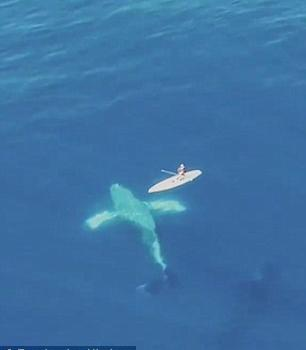 """惊险!座头鲸在水中翻身 与小船""""擦肩而过"""""""