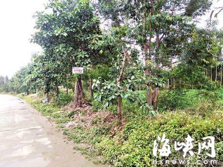 涵江莆田两女生初中等公交时被自慰女生砍伤敏感不图片