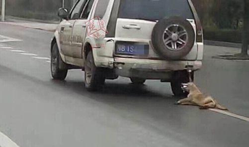 网友发出的虐狗照片