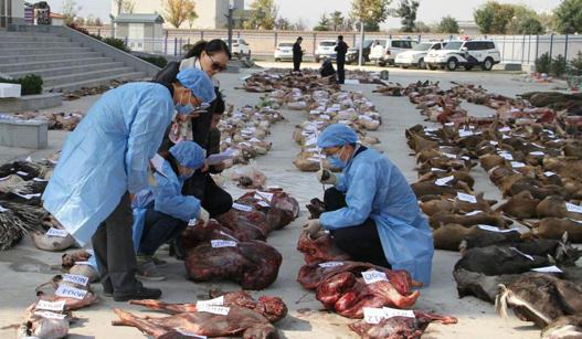 千只野生动物遭捕杀后被这样存放