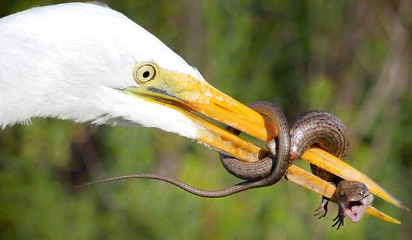 美国摄影师拍下蜥蜴身处绝境断尾求生精彩一幕