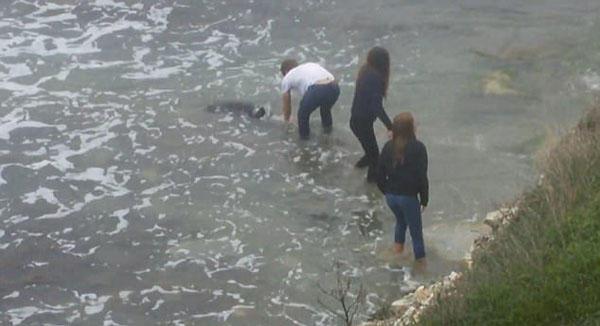 暖心!俄罗斯青年齐力解救被困海豚使其重回大海