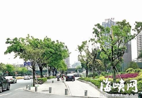 福州市乌山西路 将增种大树45株