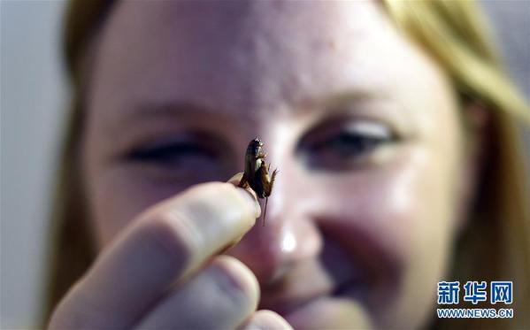 惊悚 昆虫食品在澳大受欢迎 到底哪些昆虫能吃?
