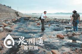 泉州惠女湾现目前国内纬度最高的海底古森林遗迹