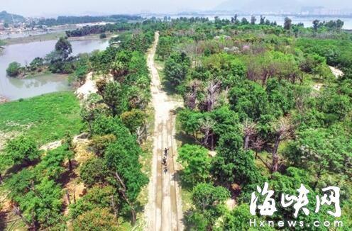 """福州的""""树木银行"""" 让大树重新""""上岗"""""""