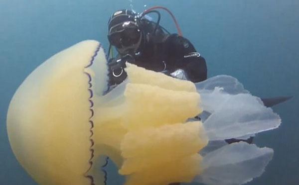 英国潜水员海中邂逅桶状水母 外形酷似外星人