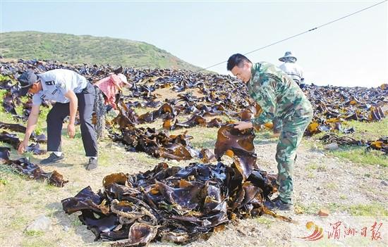 莆田市公安边防支队帮助养殖户抢收海带