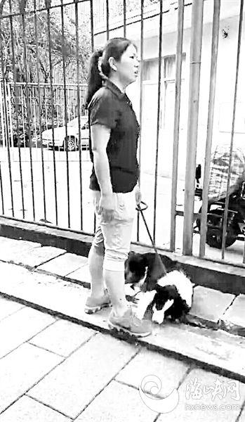 肇事的宠物狗及其主人