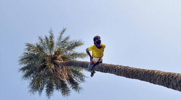 牛人!印度建筑工人5分钟可倒爬15米高大树