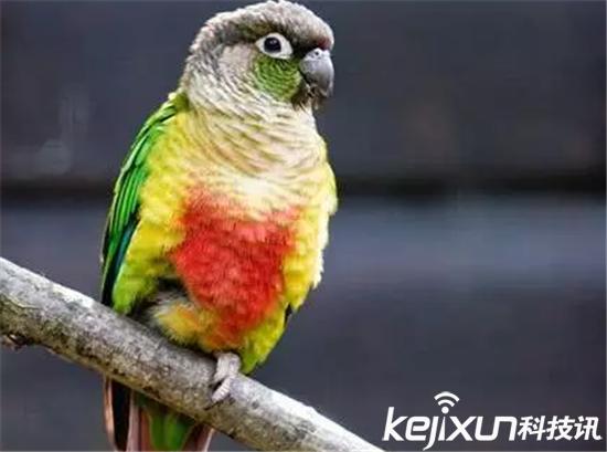 男子卖2只家养鹦鹉被判5年 80后养鹦鹉获刑案网友炸锅
