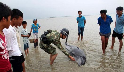 海豚受伤搁浅 警民齐心救助
