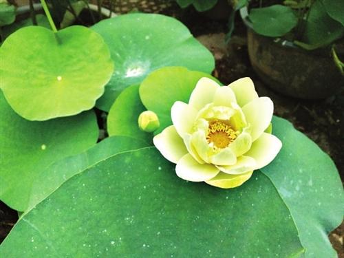 5月的福州百花盛开 这一季花海色彩最丰富