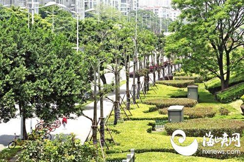 福州完成72条林荫道升级改造 种植3万多棵大树