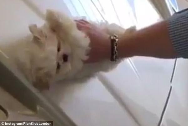 英國一富家子用寵物犬給跑車拋光 被指虐待動物