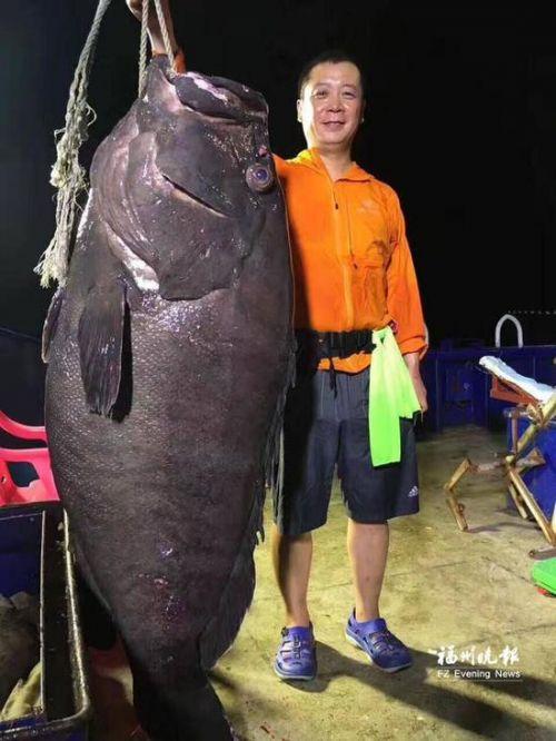 男子海钓100多公斤石斑鱼 巨型鱼图片曝光