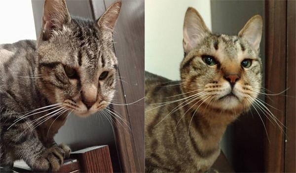 """猫咪抓蜜蜂被蛰成""""猪头"""":心疼又好笑"""