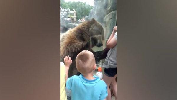 美国动物园灰熊和儿童亲密互动 萌趣活泼惹人爱