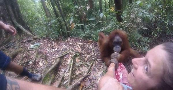 哭笑不得!印尼丛林大猩猩 抓住女游客不松手