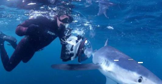 """没有对手?菲尔普斯将与大白鲨同池""""一争高下"""""""