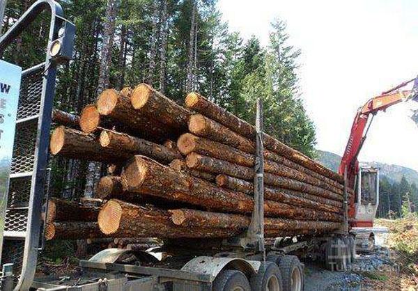 """美国木材""""过剩""""来华推销 中国成美国最大市场"""