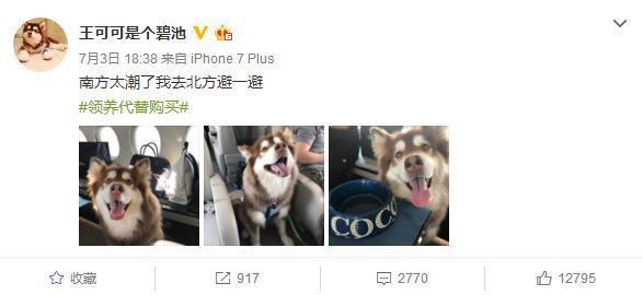 王思聪带狗坐飞机犯法吗?私人飞机能将宠物带上客舱吗