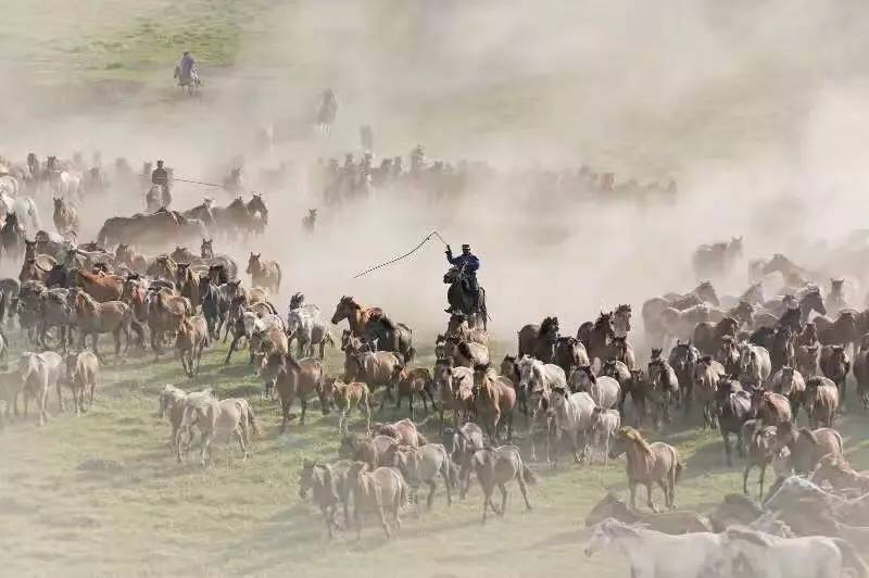福建福州团坝上摄影旅游独立团 木兰围场蒙古包万马奔腾图片